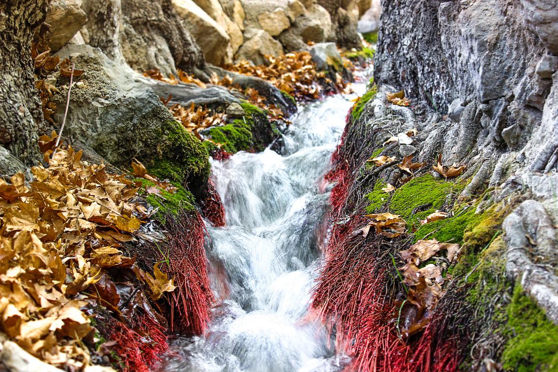 Estahban waterfall in golden autumn