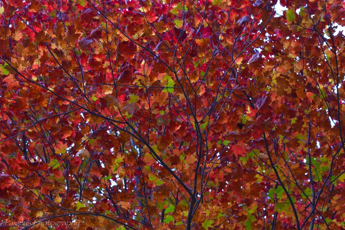 Rainbow Of Leaves