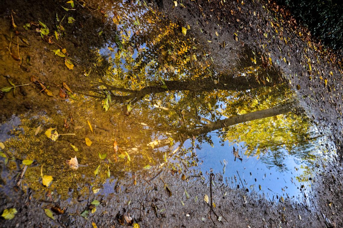 انعکاس پاییز