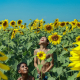 Smile Of Sunflowers