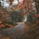 صورة الخريف من الغابة