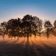 2020fallcontest-1-autumn-fog