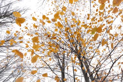 """""""Leaves floating overhead ......"""
