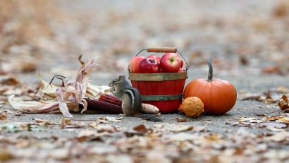 Chippie's Autumn Feast