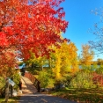 fall-cornwall-canada