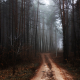 Trail trees in autumn forest Nature landscape