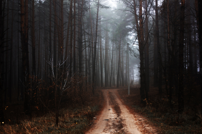 Trail trees in autumn forest N...