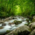 smoky-mountain-streams
