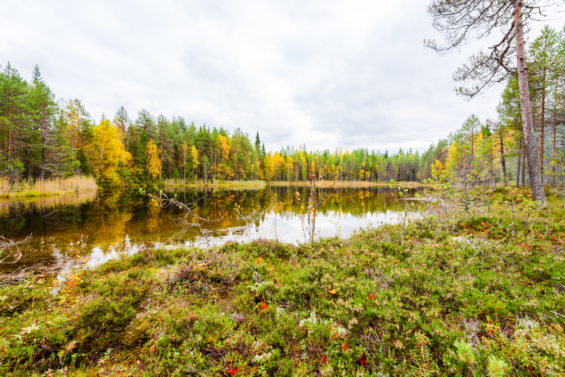 Small autumn lake