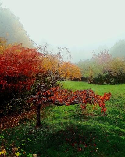My lovely November