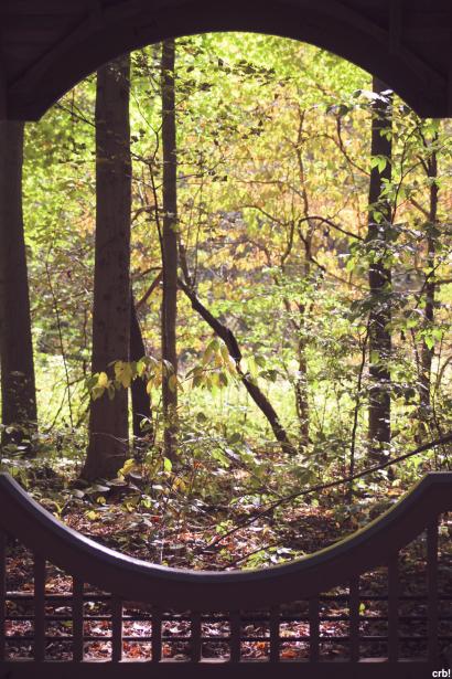 Fall through natures eyes