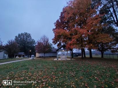 Leaves' fall