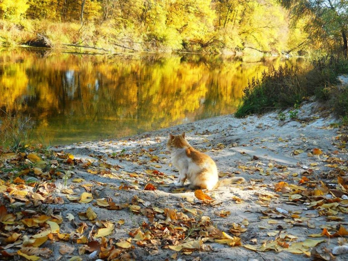 Ginger cat in the autumn forest