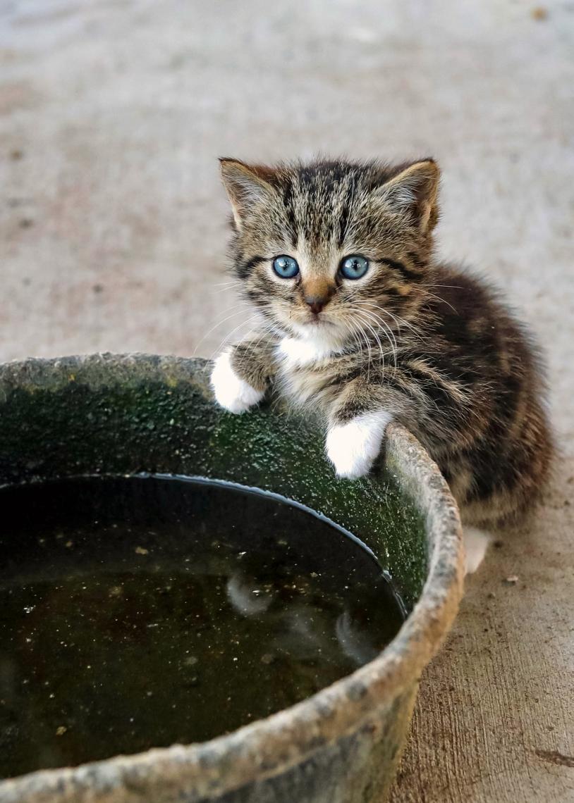 Sweet Little Farm Kitten