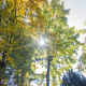 Sun through tree