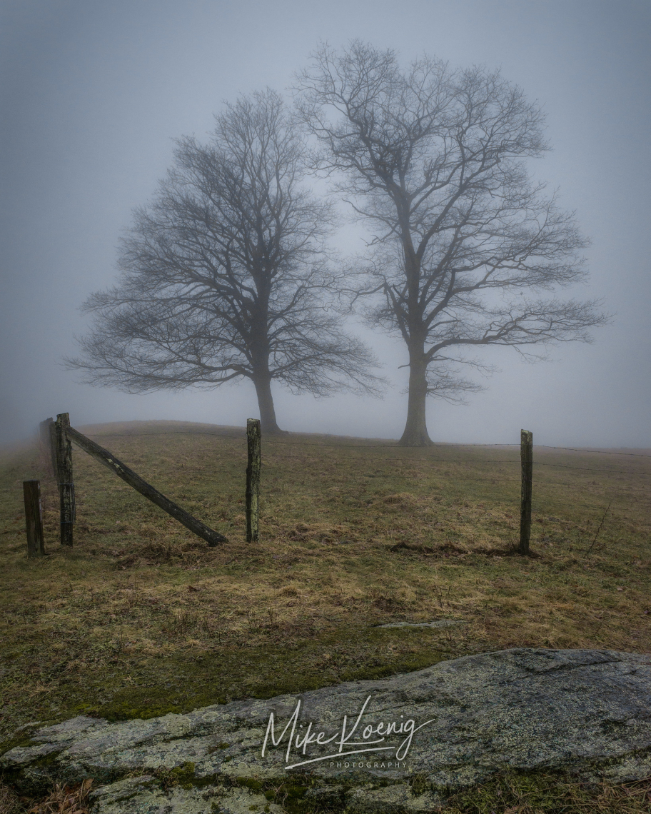 Twin Trees in Fog