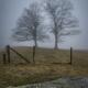 Twin Trees in Fog