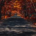 lady-autumn