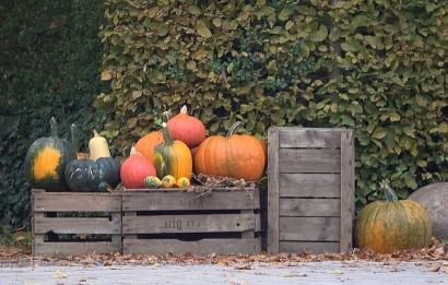 Autumn gifts.