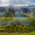 vineyard-storm