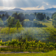 Vineyard Storm
