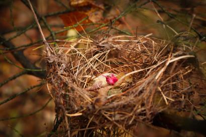 """Highlight of the nest"""
