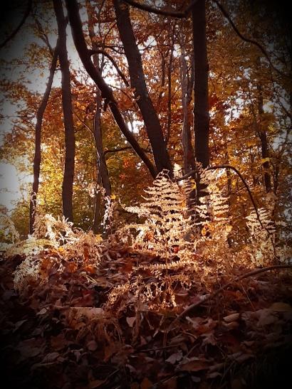 Decaying Ferns