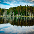 forest-reflections