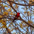 vibrant-bird
