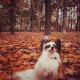 Осенняя прогулка в лесу