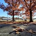 dry-leaves