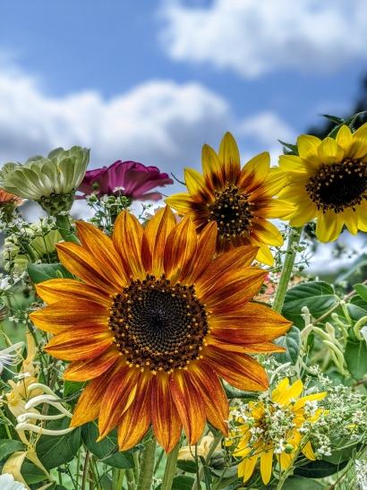 Bright Flowers, Blue Skies