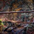 old-wooden-bridge-in-the-magic-garden