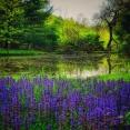 morning-pond