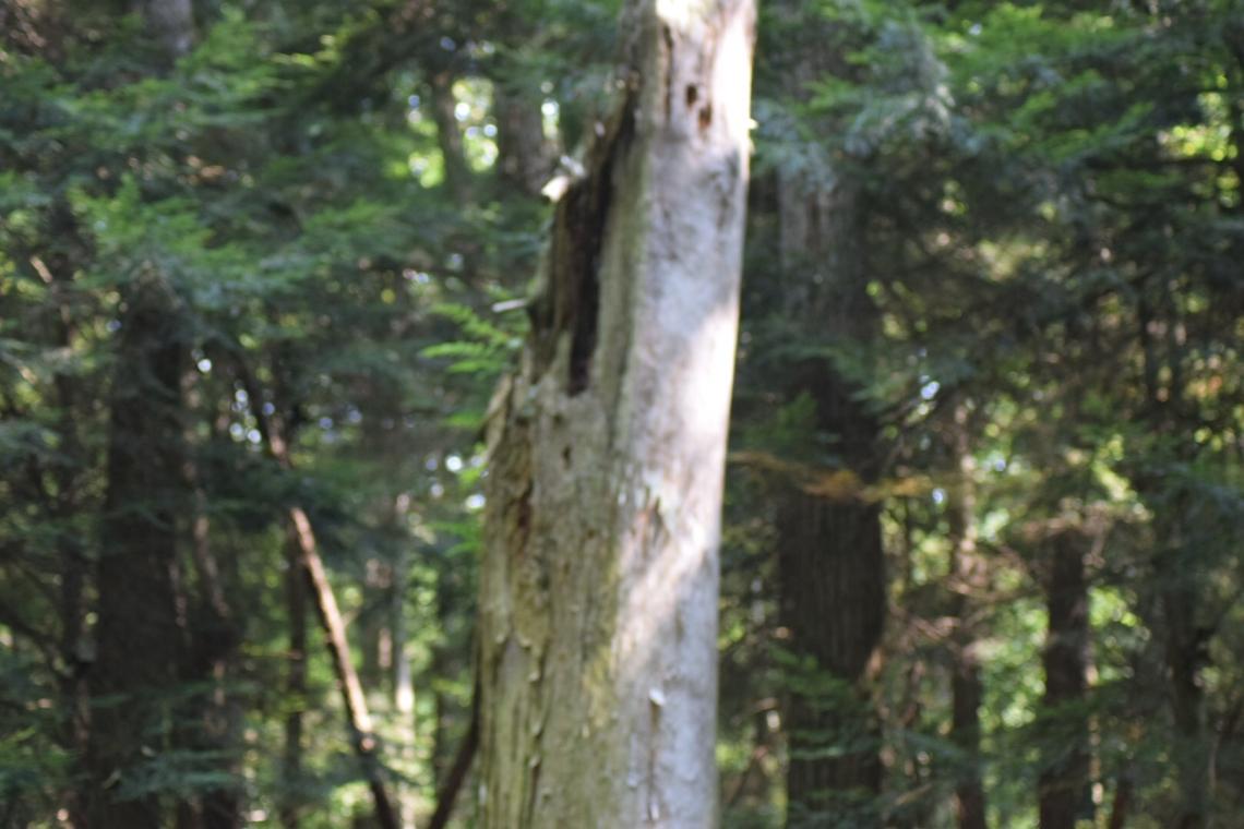 Wendy's tree