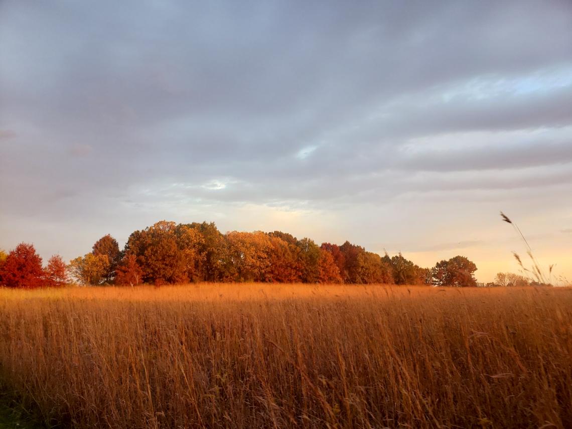 Goldenfield