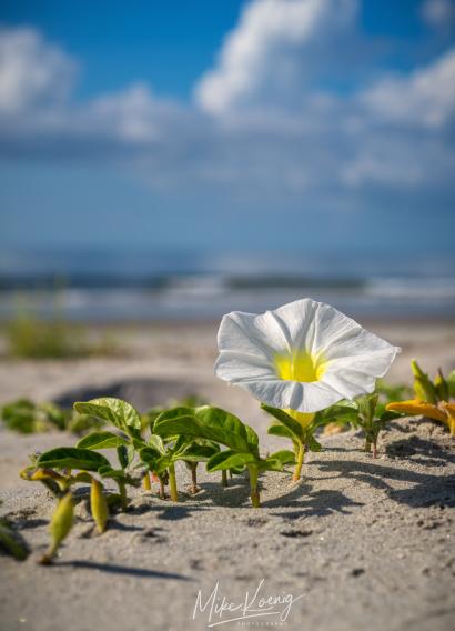 Folly Beach South Carolina Wil...