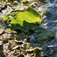 Last green autumn leafs in ice