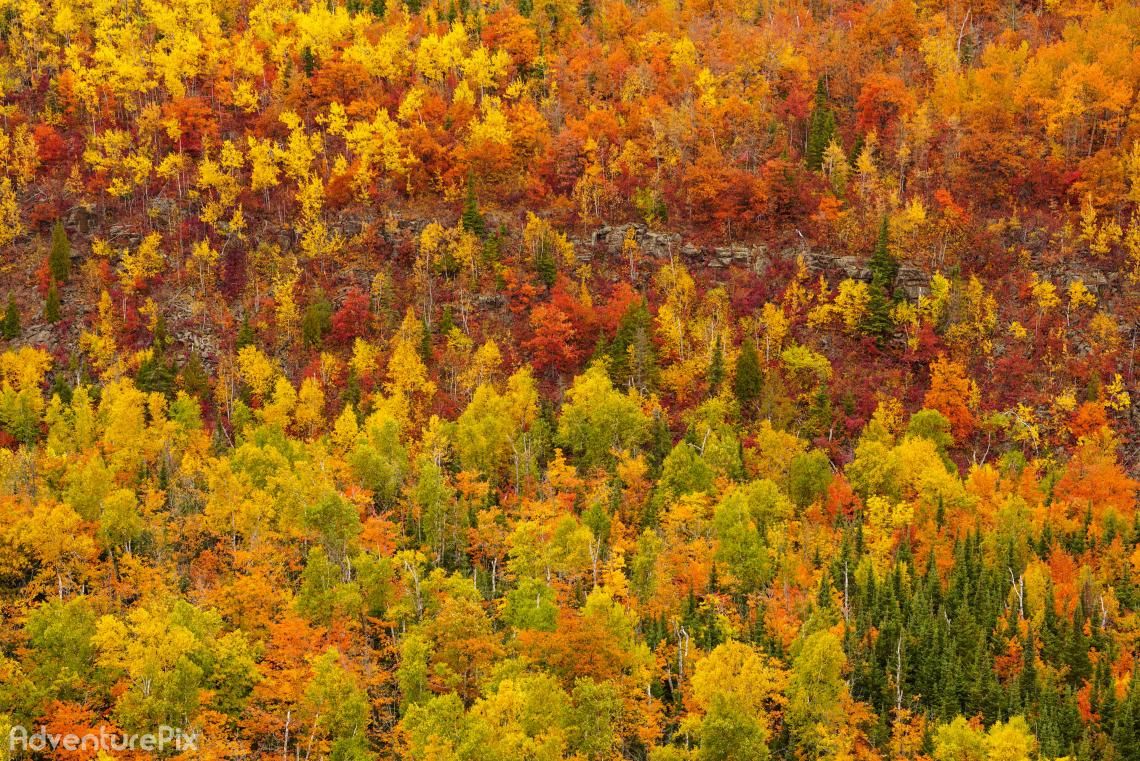 Autumn Masterpiece
