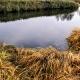 Golden River Nature Russia