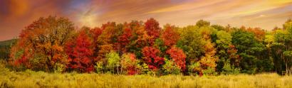 A Kaleidoscope of Color