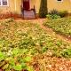 Autumn Walkways