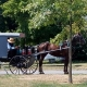 A Amish man and his buggy