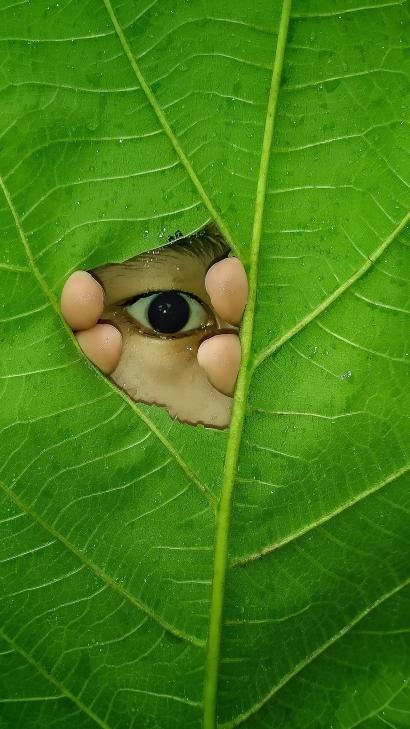 Peeking through the hole