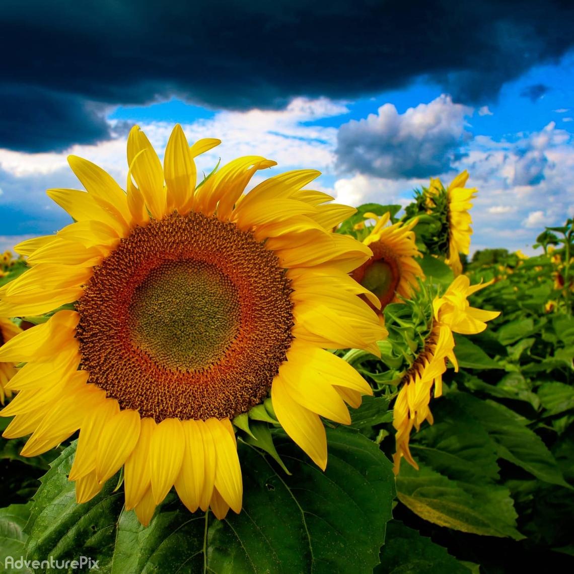 Sunshine & heavy clouds