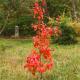 Red foliage, Autumn.