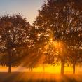 2020fallcontest-2-autumn-fog